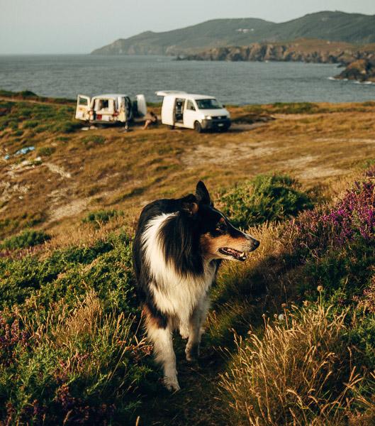 Hund an Galicischer Küste mit Campervans im Hintergrund